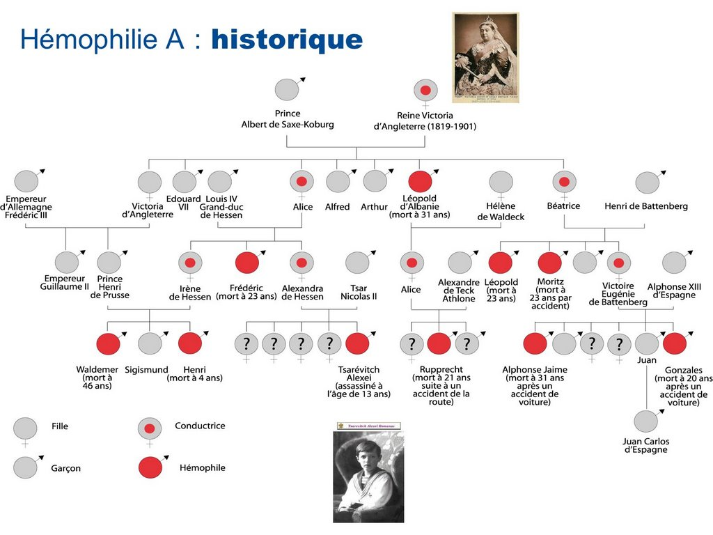 Queen Victoria Family Tree Chart