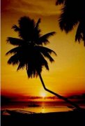 TheSunset&TheCoconutTree