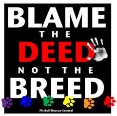 Todos contra la BSL!!!