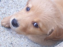 Preppy Puppy Daisy