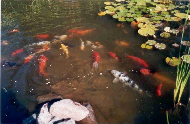 Country Koi Fish Farm