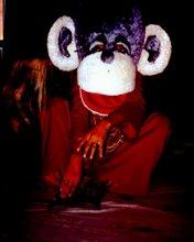 ملك القرود فى مملكة القرود