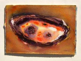 concha marina punta sal. peru