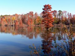 A Virginia Beach Lake