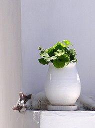 Fiin katt :)
