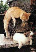 Ni Los Gatos