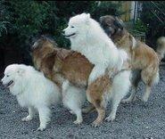 Si Ni Los Perros