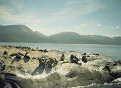 Lobos descansando Sur