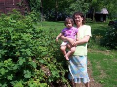 Picking Raspberries in Mechanicsburg