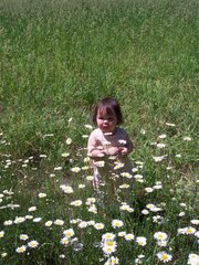 Esther among the Daisies, June 2006