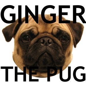Ginger the Pug