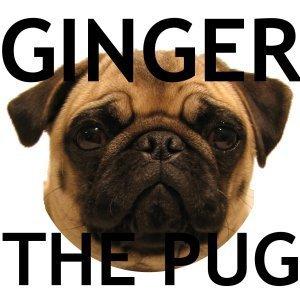 Ginger the Pug
