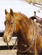 Jessie's Horse