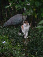 Cat with plastic heron.