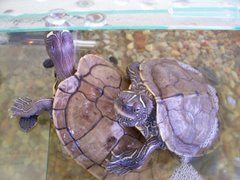 Mis tortugas
