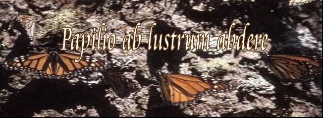 Papilio ab lustrum abdere