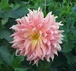 Tus flores emblemáticas