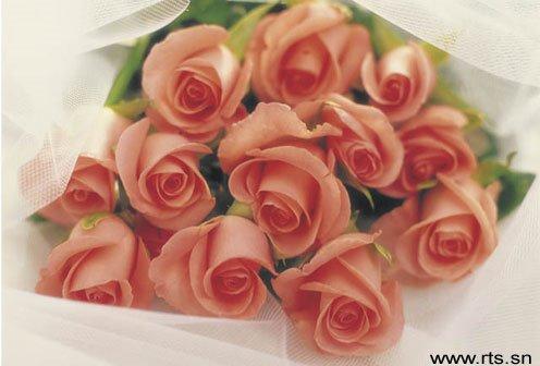 Fleur idylle rencontre