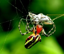 Biodiversity Gnosis & Protection