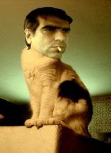Marqui-Cat