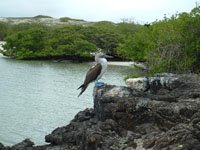 Galapagos ......