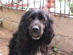 Rufus, Mi amigo fiel