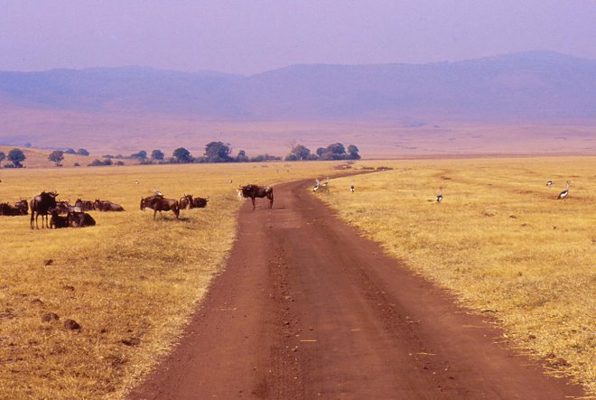Pista nel Ngorongoro