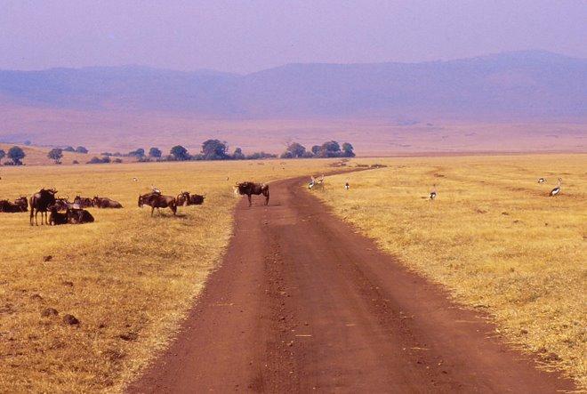 Pista nel Ngorongoro
