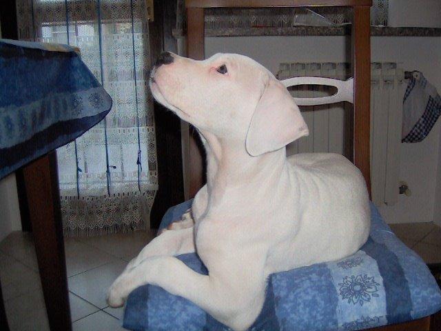 Athena, la mia cucciola!!