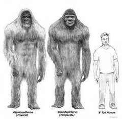 Gigantopithecus vs. Man