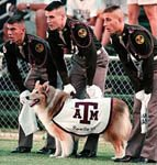 Revielle, the Aggie Mascot