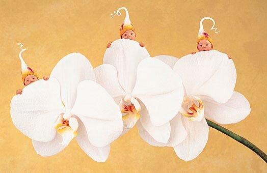 Três flor