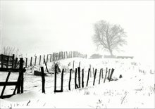 Fence and snow in Altamont