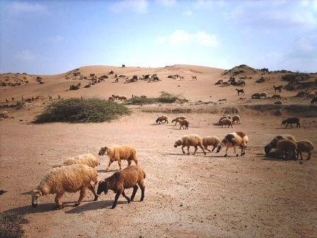 دولة بلوشستان Gse_multipart11015