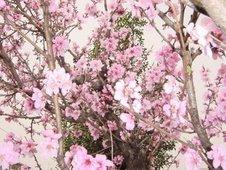 桃の里から世界の子どもたちに愛と希望を届けよう!