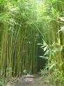 Trecho de bambuzau.