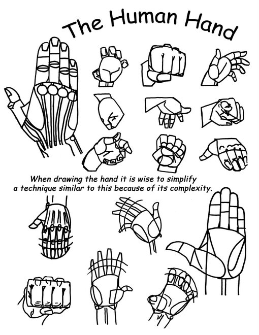 Drawing The Human Hand.