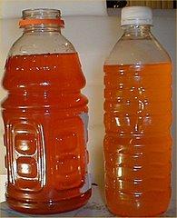Sweet Biofuel