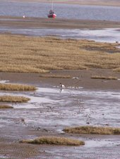 The Ribble's Inter-tidal Habitat - Fantastic for Wildlife and for People!