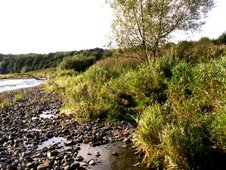 Biodiversity of Ribble riverbanks - Fishwick and Brockholes