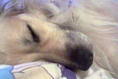 Mi perro Homer