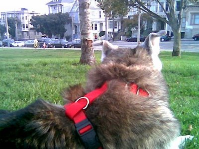 Muki at Duboce Park in San Francisco