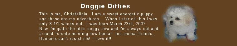 Doggy Diaries
