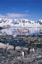 En la bahia pingüinos