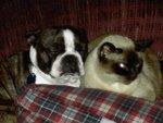 Rudy & Ping - my furbabies