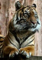 London Zoo Trip