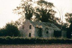Dilapidated Gadfield Elm