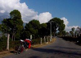 جاده جنگلی