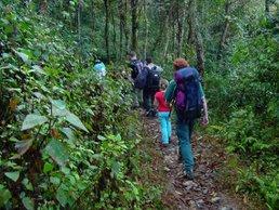 راهپیمائی در جنگل