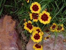 Planting a Kansas Prairie Garden